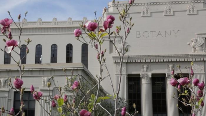 botany (1)